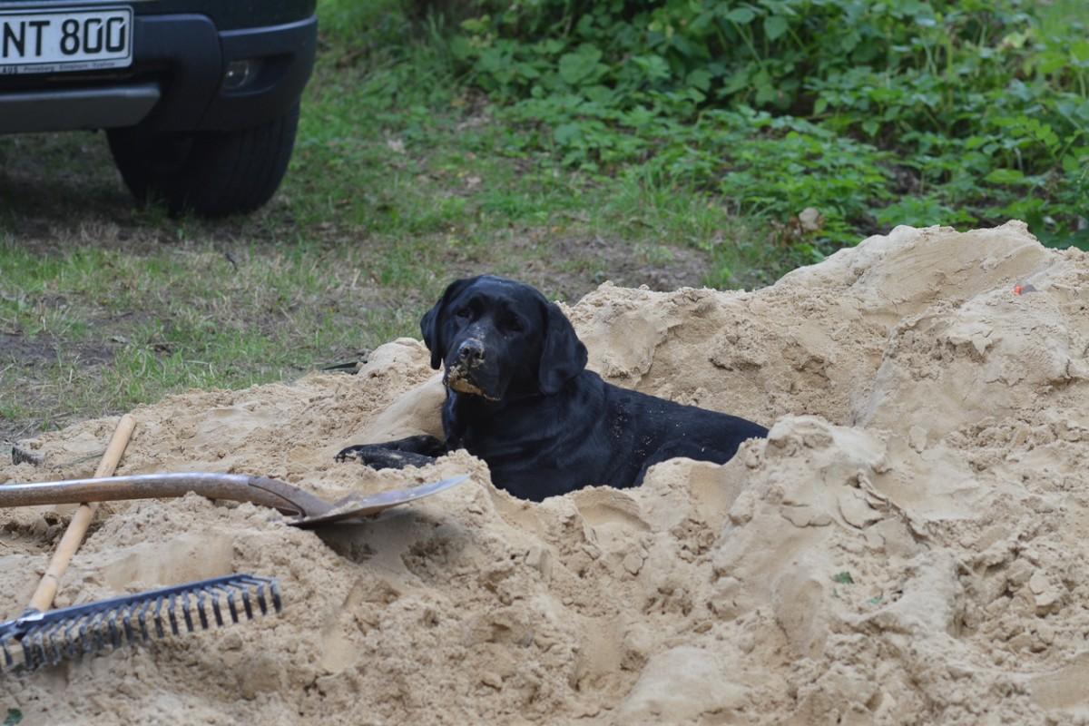 Tilda im Sandhaufen