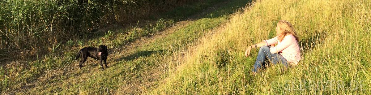 Labrador Tilda am Elbdeich